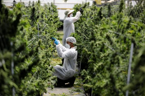 Canadian cannabis giant Cronos is making moves to enter the US. Its $110 million deal with PharmaCann would give Cronos access to New York's $7 billion market