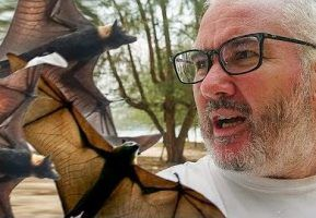 Bats, sharks and turtles: Close encounters with animals in Malaysia