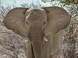 Hunters face a total ban on bringing big game trophies back to the UK