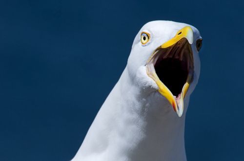 Man who bit seagull that tried to steal his McDonald's detained by police