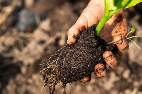 Healthy soil is important, but what does it look like?
