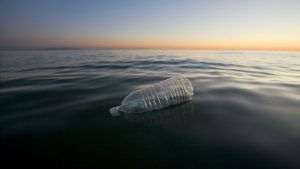 Plastic made from fish scales may be the answer to saving the planet