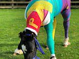 Multicoloured bandages brighten up recovery for Phoenix the foal believed to have been set alight