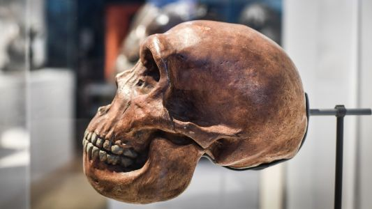 Neanderthal genes linked to severe Covid-19 symptoms