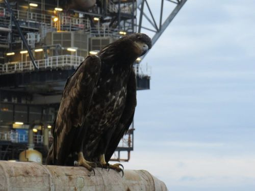 PICTURES: 'Show-stopping first' with rare sighting for North Sea Bird Club