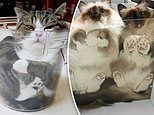Hilarious pictures prove how cats can squeeze into the most awkward spaces
