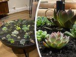 Australian plant lover wows thousands with her DIY coffee table - complete with real succulents