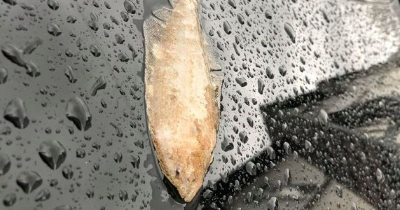 Teacher says fish 'landed on her car' during Storm Dennis downpour
