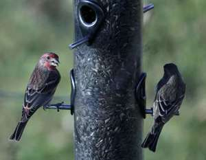 Eyes on the skies: young birdwatchers take flight
