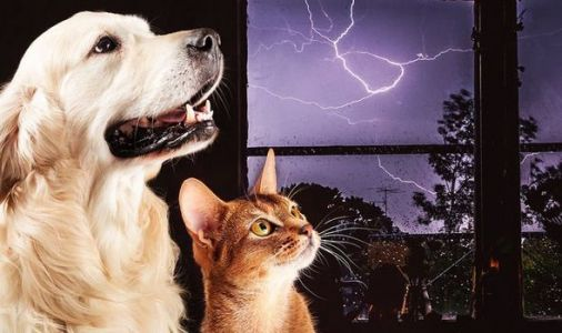 Storm Dennis pet warning: Keep dogs and cats INSIDE - urgent alert
