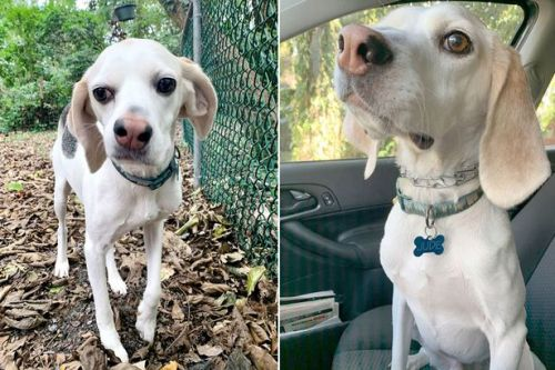 Dog who 'always looks confused' left in shelter for years due to his wonky nose