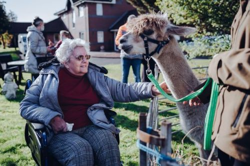 Glasgow care home residents all smiles as alpacas show up to 'alleviate loneliness'