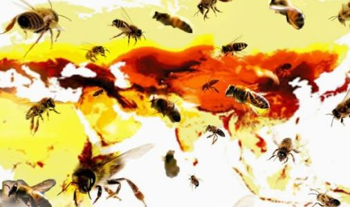 Bee population MAPPED: 20,000 bee species pinpointed in vital conservation bid