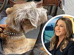Jennifer Aniston has a 'bring Clyde to work day' on set of The Morning Show