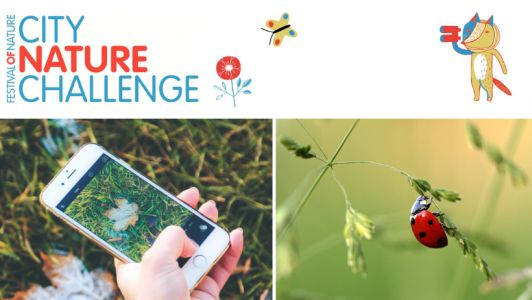 City Nature Challenge 2020 - what happened?