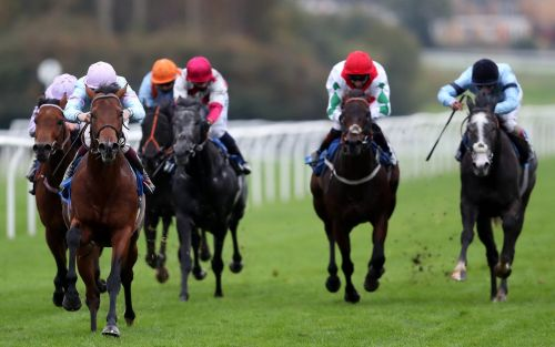 Marlborough racing tips and best bets for Thursday, December 3
