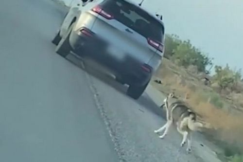 Heartbreaking moment husky abandoned on road chases after car that dumped him