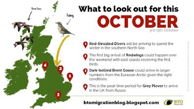 BTO Bird Migration Blog