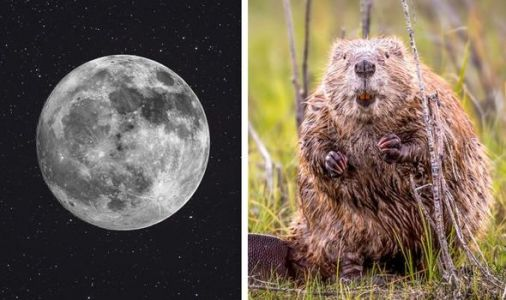 Beaver Moon 2019: When is the November Full Moon and what is the meaning behind its name?