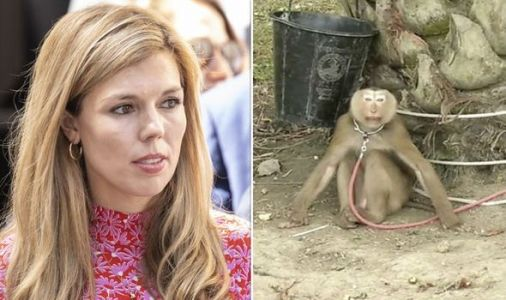 Carrie Symonds demands UK supermarkets stop selling products using cruel monkey labour