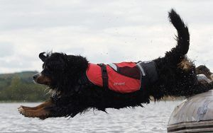 Best dog lifejackets: 6 top buoyancy aids for your canine crewmate