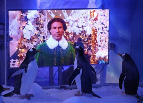 Penguins watch Elf to prepare for humans visiting after lockdown