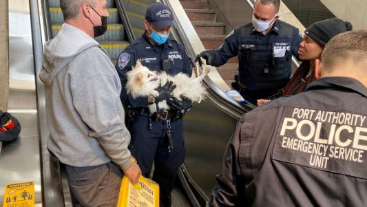 Moment dog with paw stuck in moving escalator saved by hero cops