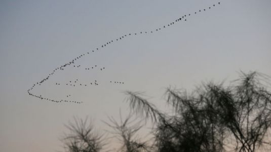 Migratory Birds Are Failing to Adapt to Climate Change