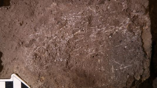 Scientists Found a 200,000-Year-Old Human Bed Made From Grass and Ash