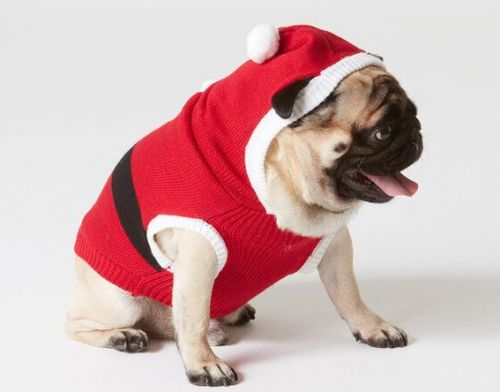 The 10 Best Christmas Jumpers For Dogs