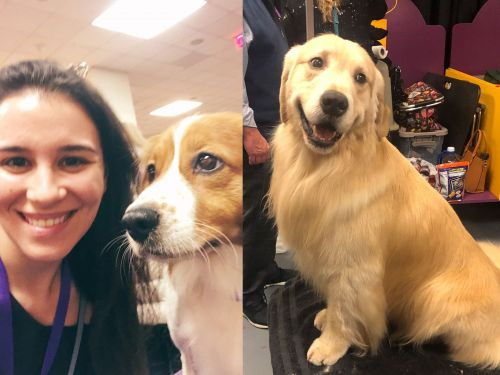 I went to the Westminster Dog Show for the first time ever and discovered backstage was heaven on earth