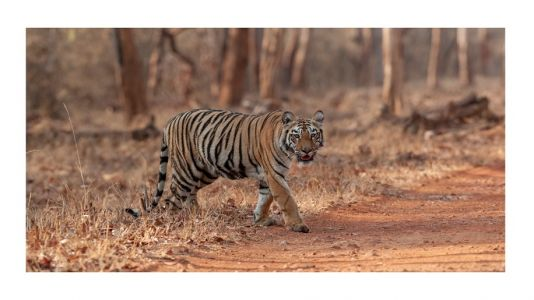 IHCL to open SeleQtions hotel in Tadoba Andhari Tiger Reserve, Maharashtra