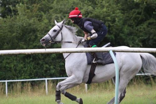 Teenager aiming to become first professional jockey to race with a prosthetic arm