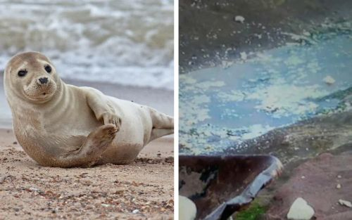 Plastic foam used by council to fill in cliff is putting seals and dolphins in danger, say environmental groups