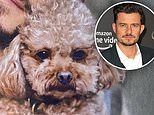 Orlando Bloom pleads with followers to help find missing dog Mighty: 'My heart is already broken'