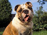 Dogs beat cats in a poll to find the nation's favourite animal