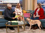 Viewers of This Morning heartbroken by five-year-old rescue dog Maggie who was shot 17 times