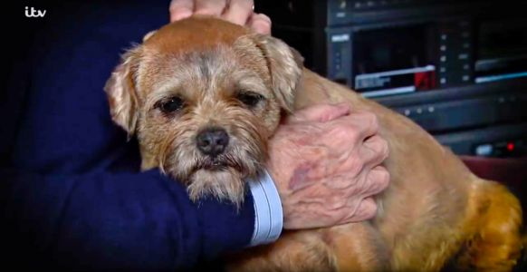 Coronation Street reassures fans that Eccles the dog isn't really dead