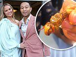 Chrissy Teigen and her husband John Legend snack on some silkworms and crickets