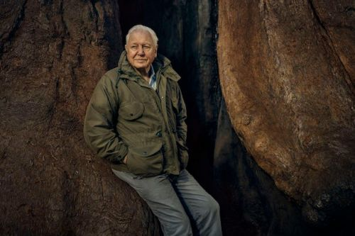 BBC Breakfast exclusive: David Attenborough to appear on Monday and Tuesday