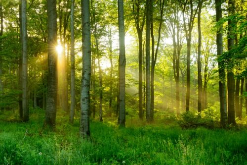 World Mental Health Day: 8 easy ways to improve your mental health with nature