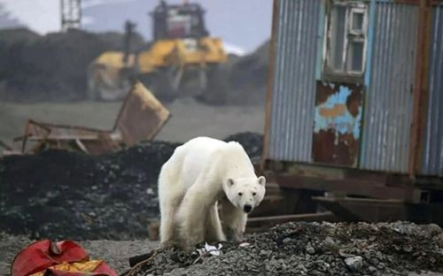 Arctic Siberia saw exceptionally high temperatures as global warmth matched last year's record levels for June