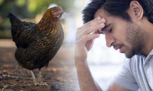 Bird flu outbreak reported at Suffolk farm - are you at risk of becoming infected?