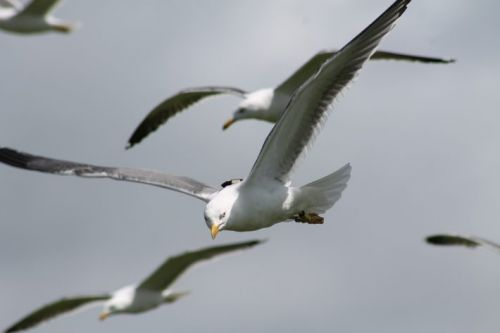Wildlife and wind farms: Are British gulls staying safe in the winter sun?
