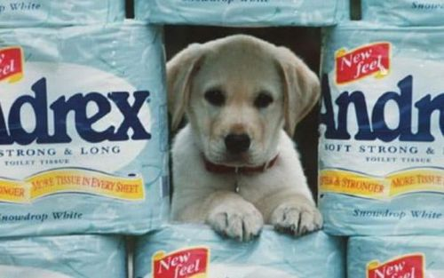 Andrex told to stop claiming their wet wipes are 'flushable'