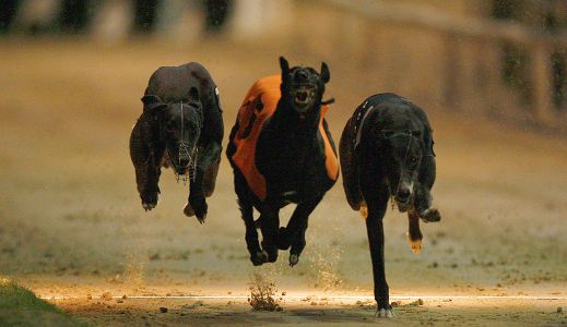 Timeform Greyhound SmartPlays: Lady to Get Away at Yarmouth this evening