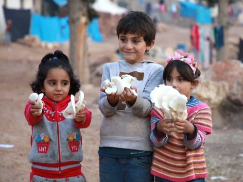 Mushrooms used to be rare in Syria - but thousands of refugees are now relying on them to survive