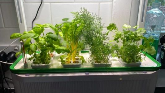 Review: This Hydroponic Herb Garden Kept Me Sane During Iso