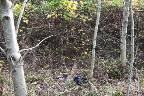 Member of the public finds two skinned dogs hanging from trees in woodland
