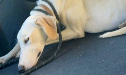 Dog dies after being thrown from car at 60mph - police launch investigation